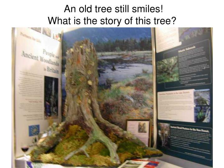 An old tree still smiles!