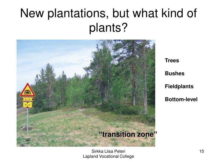 New plantations, but what kind of plants?