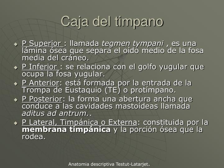 Caja del timpano