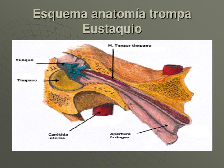 Esquema anatomía trompa Eustaquio