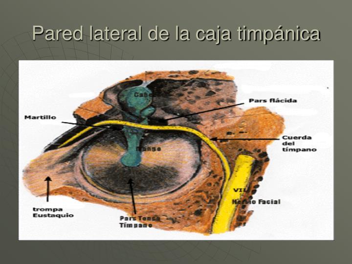 Pared lateral de la caja timpánica