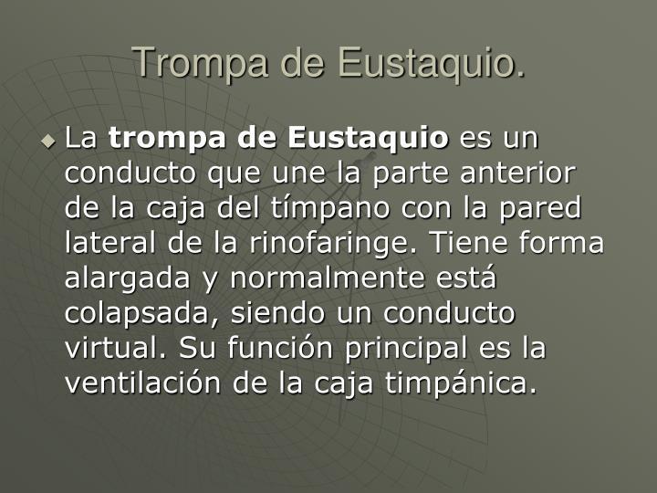 Trompa de Eustaquio.