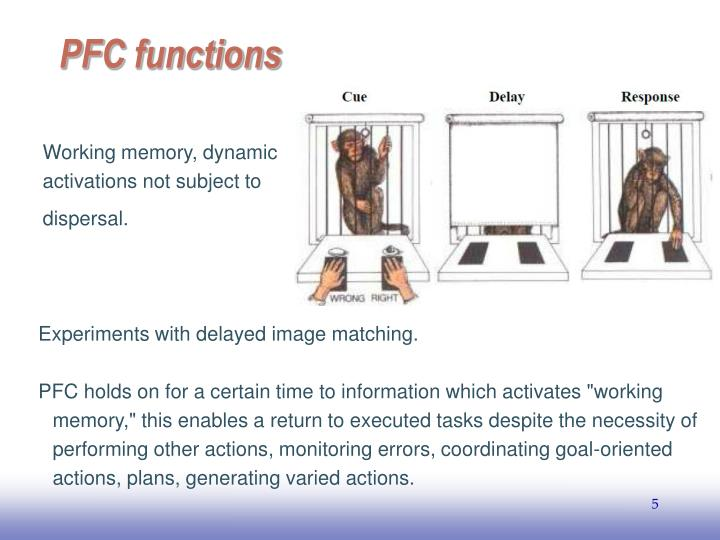 Working memory, dynamic activations not