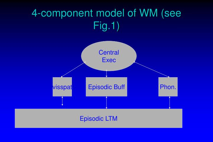 4-component model of WM (see Fig.1)