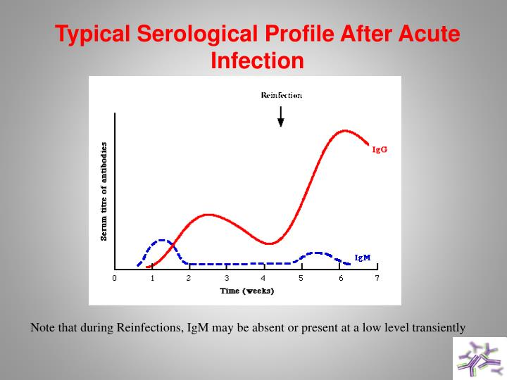 Typical Serological Profile After Acute Infection