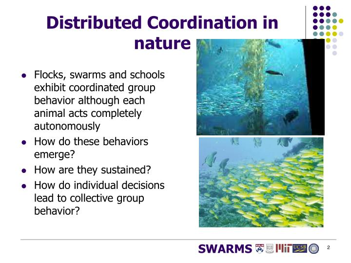 Distributed coordination in nature