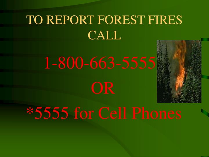 TO REPORT FOREST FIRES