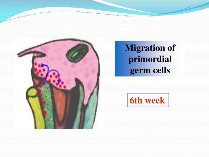 Migration of primordial germ cells