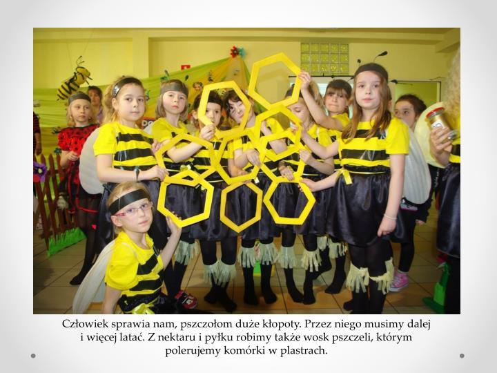 Człowiek sprawia nam, pszczołom duże kłopoty. Przez niego musimy dalej i więcej latać. Z nektaru i pyłku robimy także wosk pszczeli, którym polerujemy komórki w plastrach.