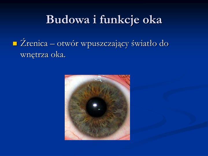 Budowa i funkcje oka