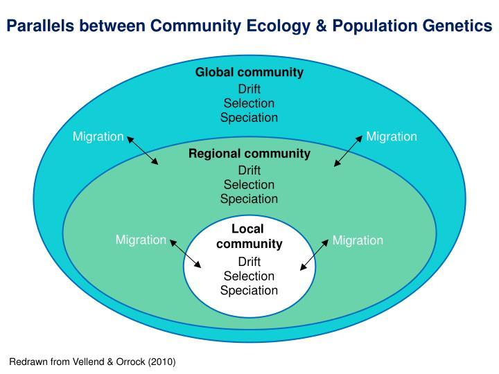 Parallels between Community Ecology & Population Genetics
