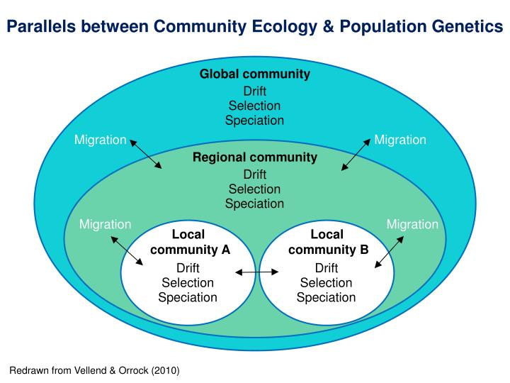 Parallels between Community Ecology & Population Genetics