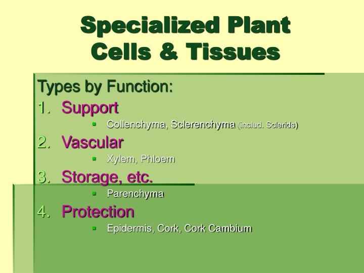 Specialized Plant