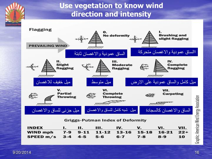 Use vegetation to know wind direction and intensity