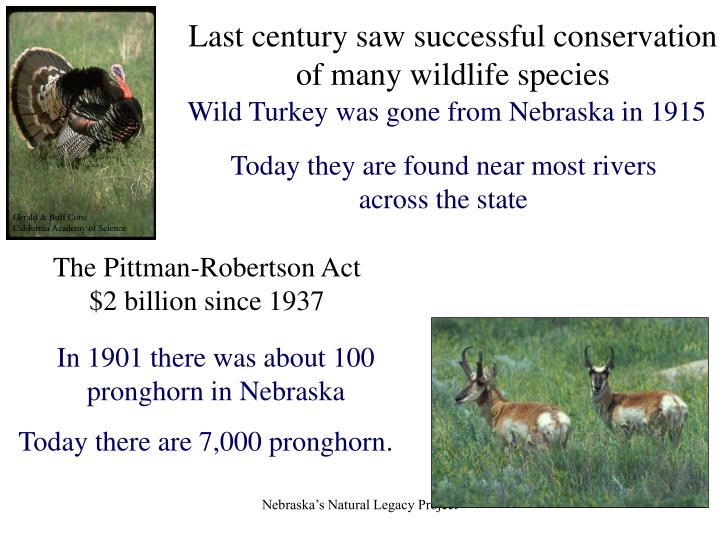 Last century saw successful conservation of many wildlife species