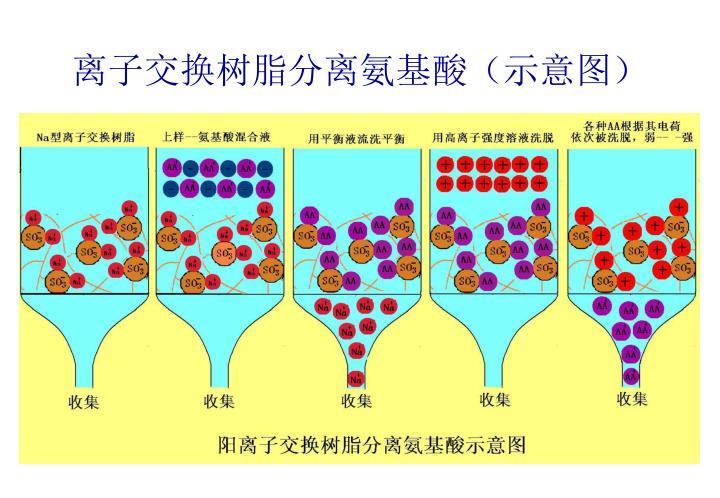 离子交换树脂分离氨基酸(示意图)