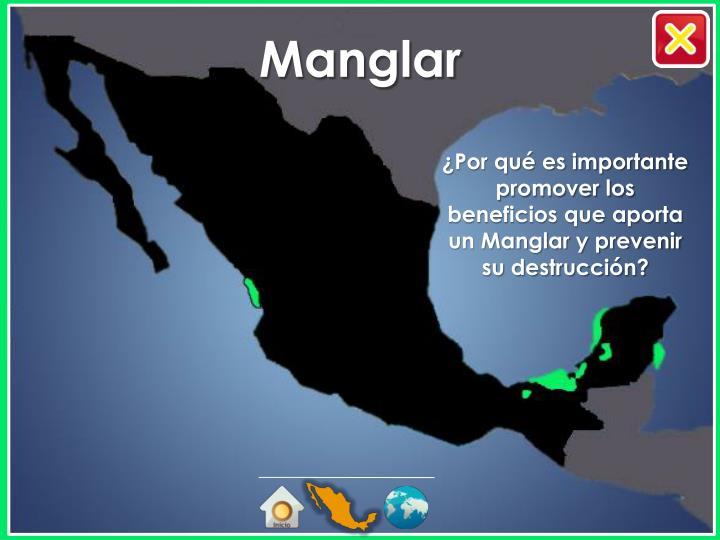 ¿Por qué es importante promover los beneficios que aporta un Manglar y prevenir su destrucción?