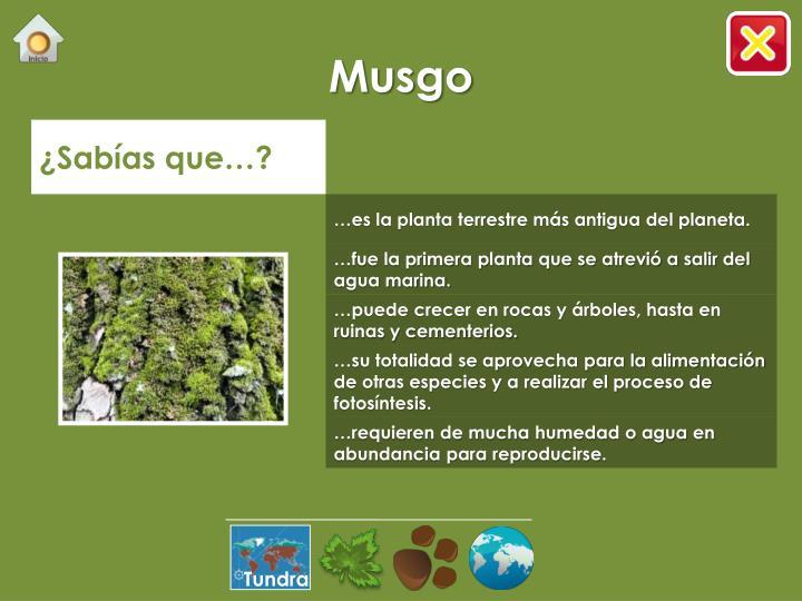 Musgo
