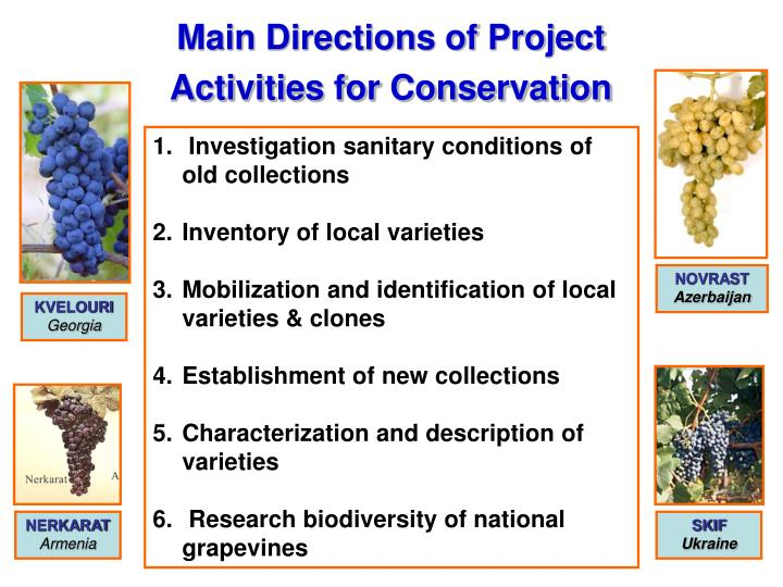 Main Directions of Project