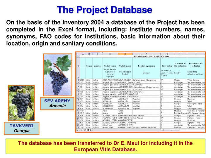 The Project Database