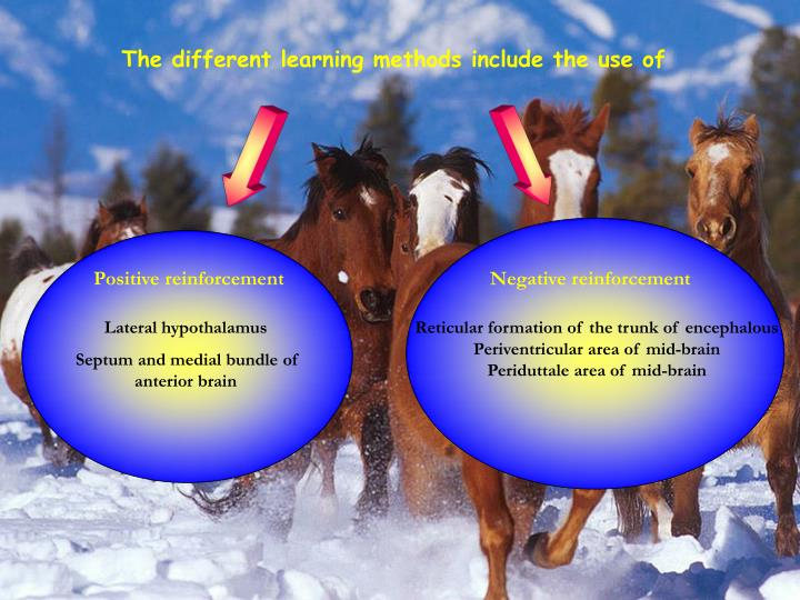 The different learning methods include the use of