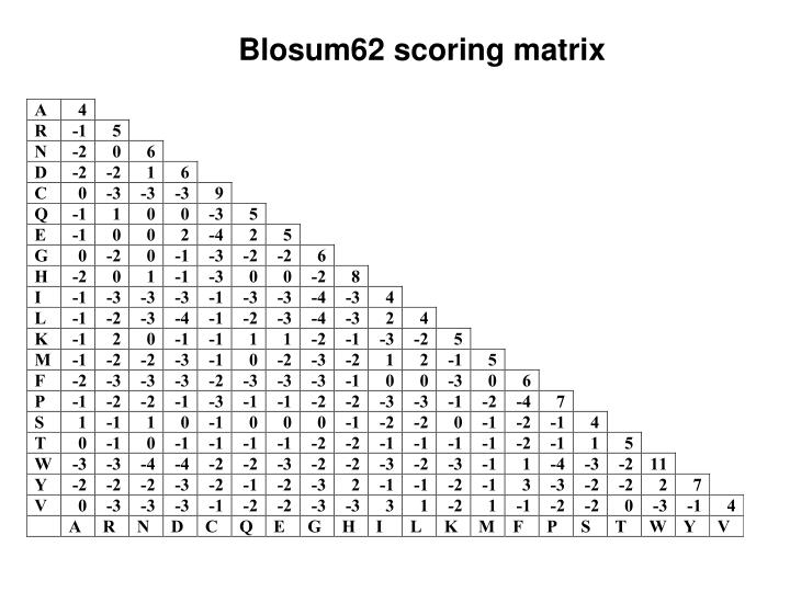 Blosum62 scoring matrix