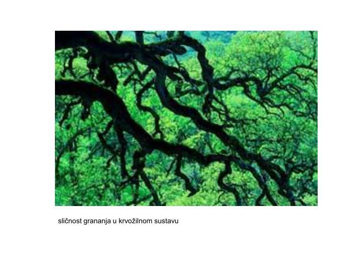 sličnost grananja u krvožilnom sustavu