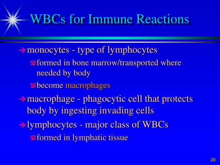 WBCs for Immune Reactions