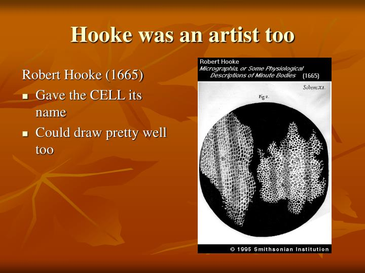 Hooke was an artist too
