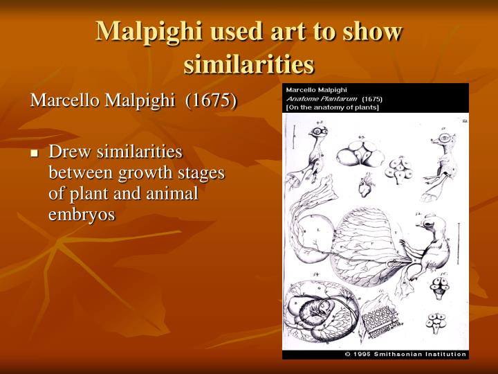 Malpighi used art to show similarities