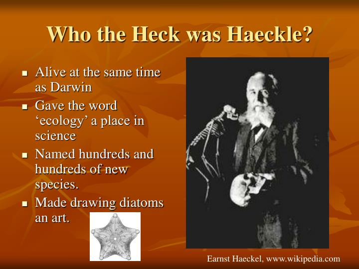 Who the Heck was Haeckle?