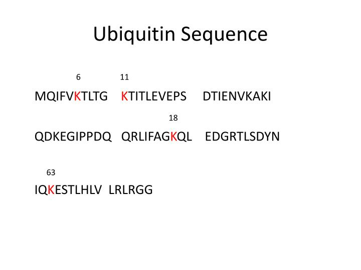 Ubiquitin Sequence