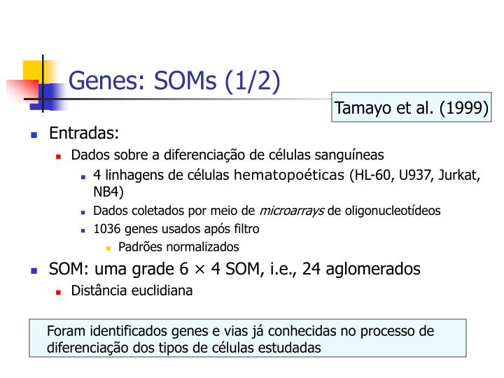 Foram identificados genes e vias já conhecidas no processo de diferenciação dos tipos de células estudadas