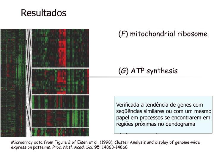 Verificada a tendência de genes com seqüências similares ou com um mesmo papel em processos se encontrarem em regiões próximas no dendograma