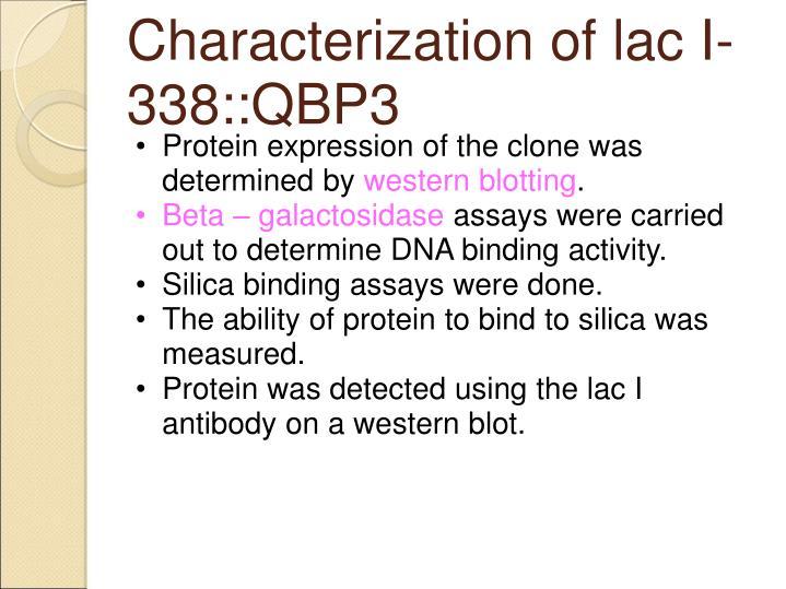 Characterization of lac I-338::QBP3