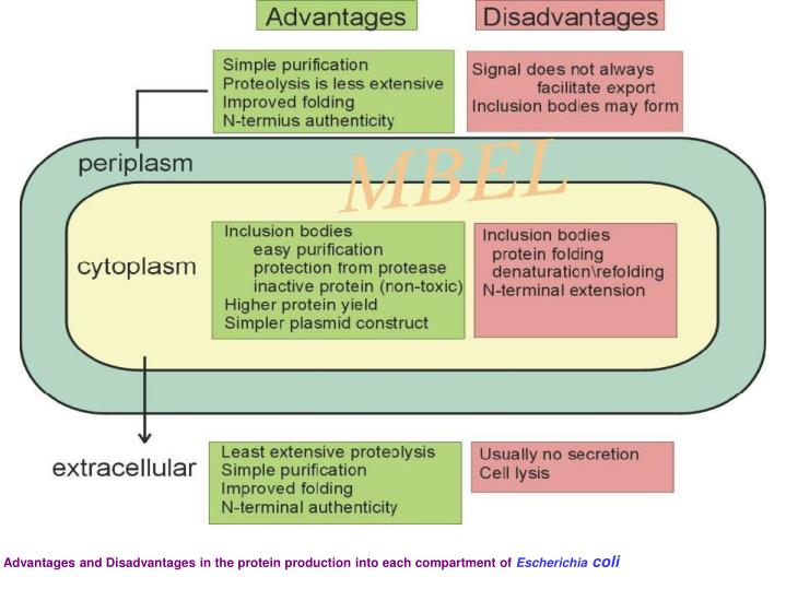 Advantages and Disadvantages in the protein production into each compartment of