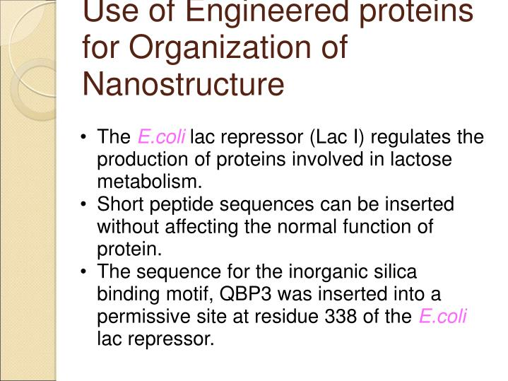 Use of Engineered proteins for Organization of Nanostructure