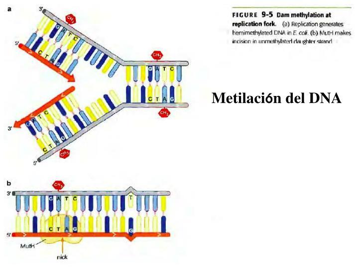 Metilaci