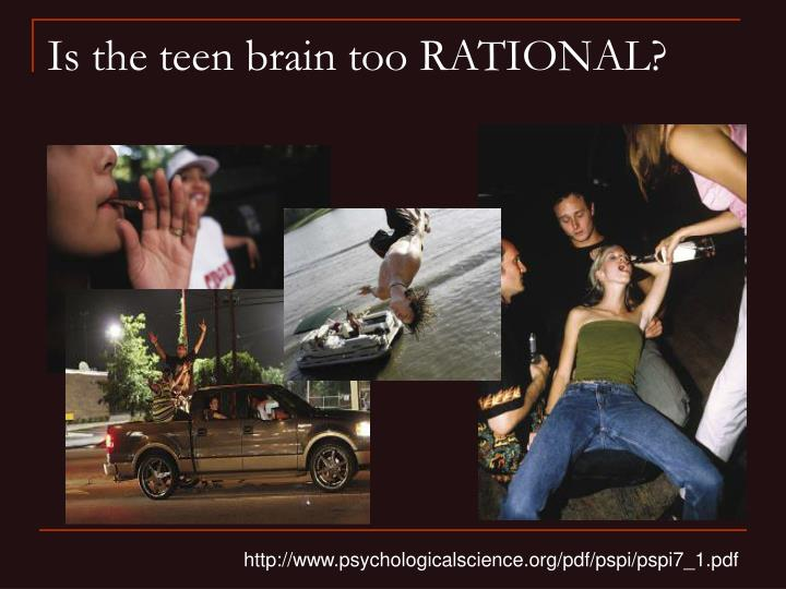 Is the teen brain too RATIONAL?