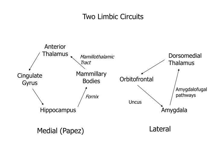 Two Limbic Circuits