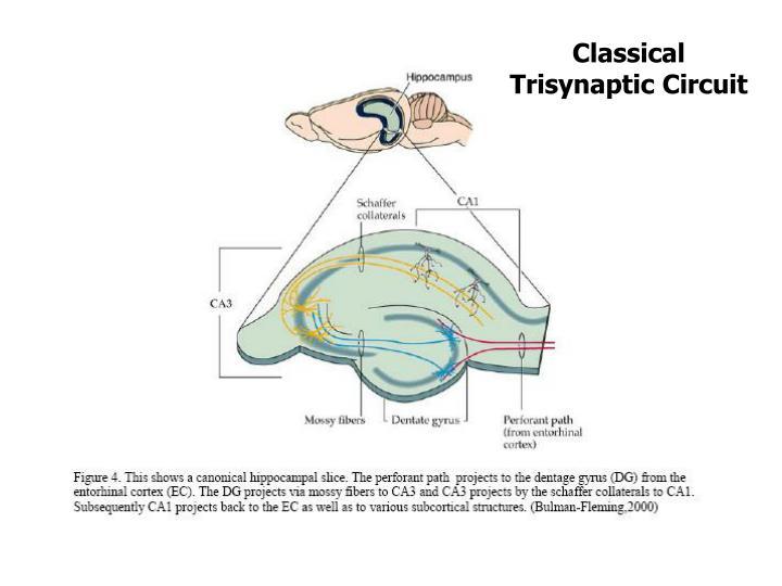 Classical Trisynaptic Circuit
