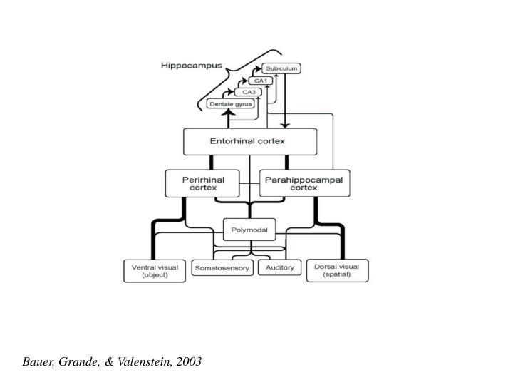 Bauer, Grande, & Valenstein, 2003