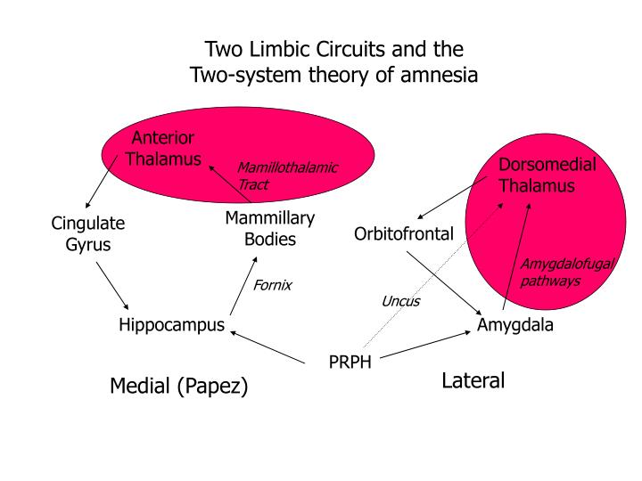 Two Limbic Circuits and the