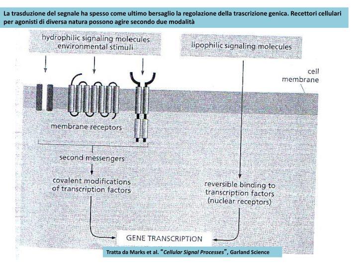 La trasduzione del segnale ha spesso come ultimo bersaglio la regolazione della trascrizione genica. Recettori cellulari