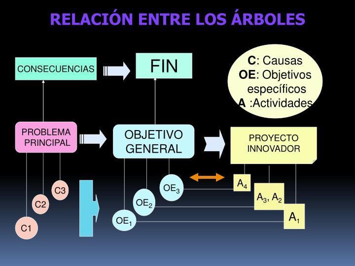 RELACIÓN ENTRE LOS ÁRBOLES