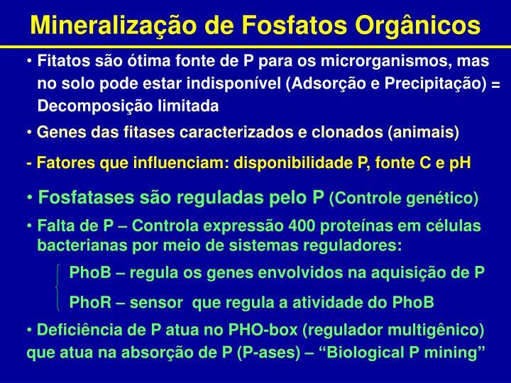 Fosfatases são reguladas pelo P