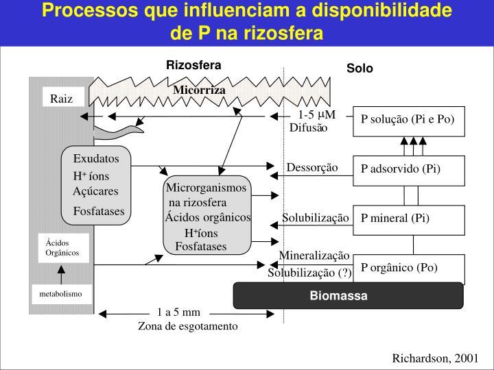 Processos que influenciam a disponibilidade