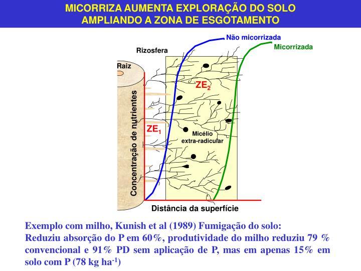 MICORRIZA AUMENTA EXPLORAÇÃO DO SOLO