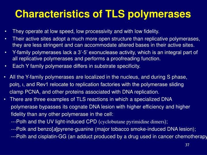 Characteristics of TLS polymerases