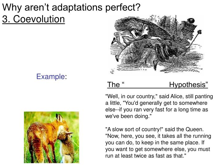 Why aren't adaptations perfect?